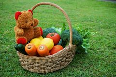 Basket of mixed vegetable and teddy bear doll. At backyard Royalty Free Stock Image