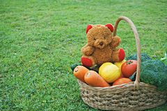 Basket of mixed vegetable and teddy bear doll. With grass lawn background Stock Images