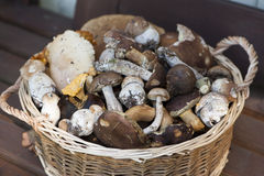 Basket with muhsrooms. Basket with many forest muhsrooms stock image
