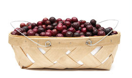 Basket of Muscadines Royalty Free Stock Image