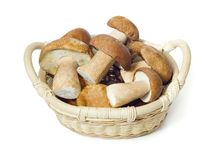 Basket with mushroom Royalty Free Stock Photo