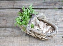 Basket of mushroom Stock Image