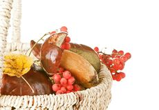 Basket with mushroom, berry and leaf Stock Photography