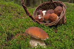 Basket with mushroom Stock Image