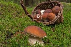 Basket with mushroom Stock Image