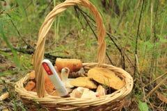 Basket with mushroom Royalty Free Stock Image