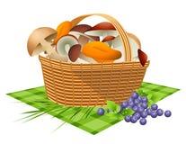 Basket with mushrooms Stock Photos