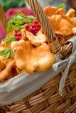 Basket with mushrooms royalty free stock photo