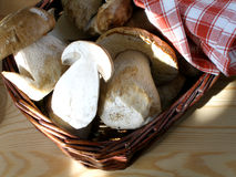 Basket of mushrooms. Basket of ceps with brown towel royalty free stock photography