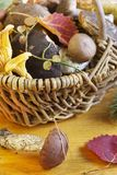 Basket with mushrooms Stock Image