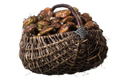 Basket with mushrooms Stock Photography