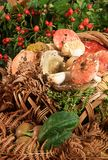 Basket with mushrooms Stock Image