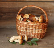Basket with mushrooms. Mushroom basket on wooden background stock image