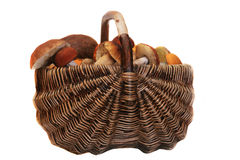 Basket of mushrooms. Basket of mushrooms isolated on white Stock Photos
