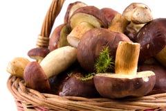 Basket  mushrooms Royalty Free Stock Images