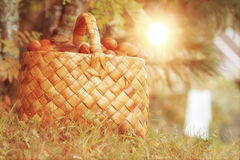Basket with mushrooms autumn forest sun Royalty Free Stock Images