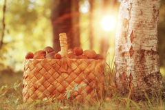 Basket with mushrooms Royalty Free Stock Photo