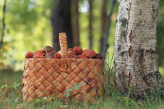 Basket with mushrooms Stock Photos