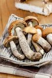 Basket of mushrooms Royalty Free Stock Photos