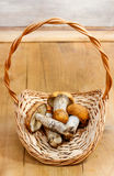 Basket of mushrooms Stock Images