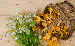 Basket of mushrooms and bouquet of camomiles Royalty Free Stock Photography