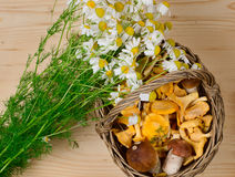 Basket of mushrooms and bouquet of camomiles Royalty Free Stock Images