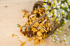 Basket of mushrooms and bouquet of camomiles Royalty Free Stock Photo