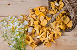 Basket of mushrooms and bouquet of camomiles Stock Images