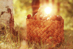 Basket with mushrooms in  forest Stock Photography