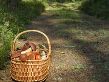 Basket with mushrooms. Basket full with mushrooms on the forest road Stock Photography