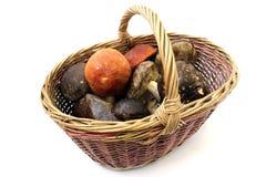 Basket of mushrooms Stock Photos