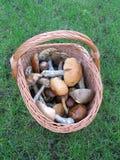 Basket with mushrooms (Fungi) Royalty Free Stock Photos