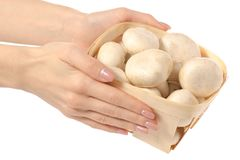 Basket of mushrooms in hand. On a white background isolation Royalty Free Stock Photography