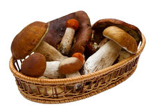 Basket with mushrooms isolated Royalty Free Stock Image