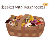Basket with mushrooms. Stock Photos