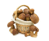 Basket with mushrooms isolated on a white background Stock Image