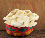 Basket of mushrooms in kitchen Royalty Free Stock Photos