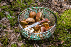 Basket with mushrooms and a knife Royalty Free Stock Image