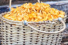 Basket of mushrooms on log background Royalty Free Stock Images