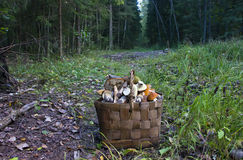 The basket of mushrooms Royalty Free Stock Photo