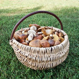 Basket with mushrooms Royalty Free Stock Photos
