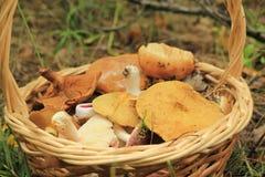 Basket with mushrooms Stock Photo