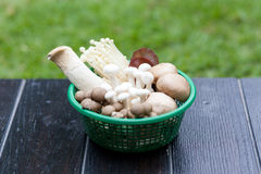 Basket of mushrooms Stock Image