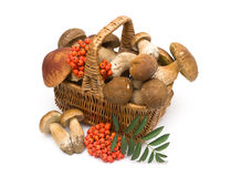 Basket with mushrooms on a white background Royalty Free Stock Image