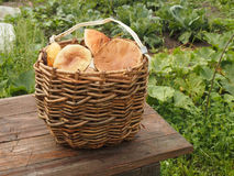 Basket with mushrooms. Wicker basket with mushrooms on a wooden table Stock Image