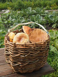 Basket with mushrooms. Wicker basket with mushrooms on a wooden table Royalty Free Stock Photography