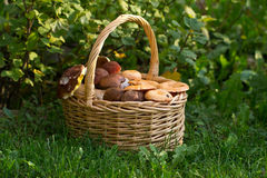 Basket with mushrooms Stock Photo