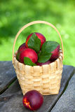 Basket with nectarines Stock Images