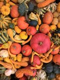 Pumpkins Mix Of Various Colors And Varieties Royalty Free Stock Photo