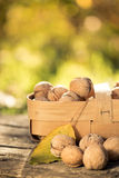 Basket of nuts in autumn Stock Photography
